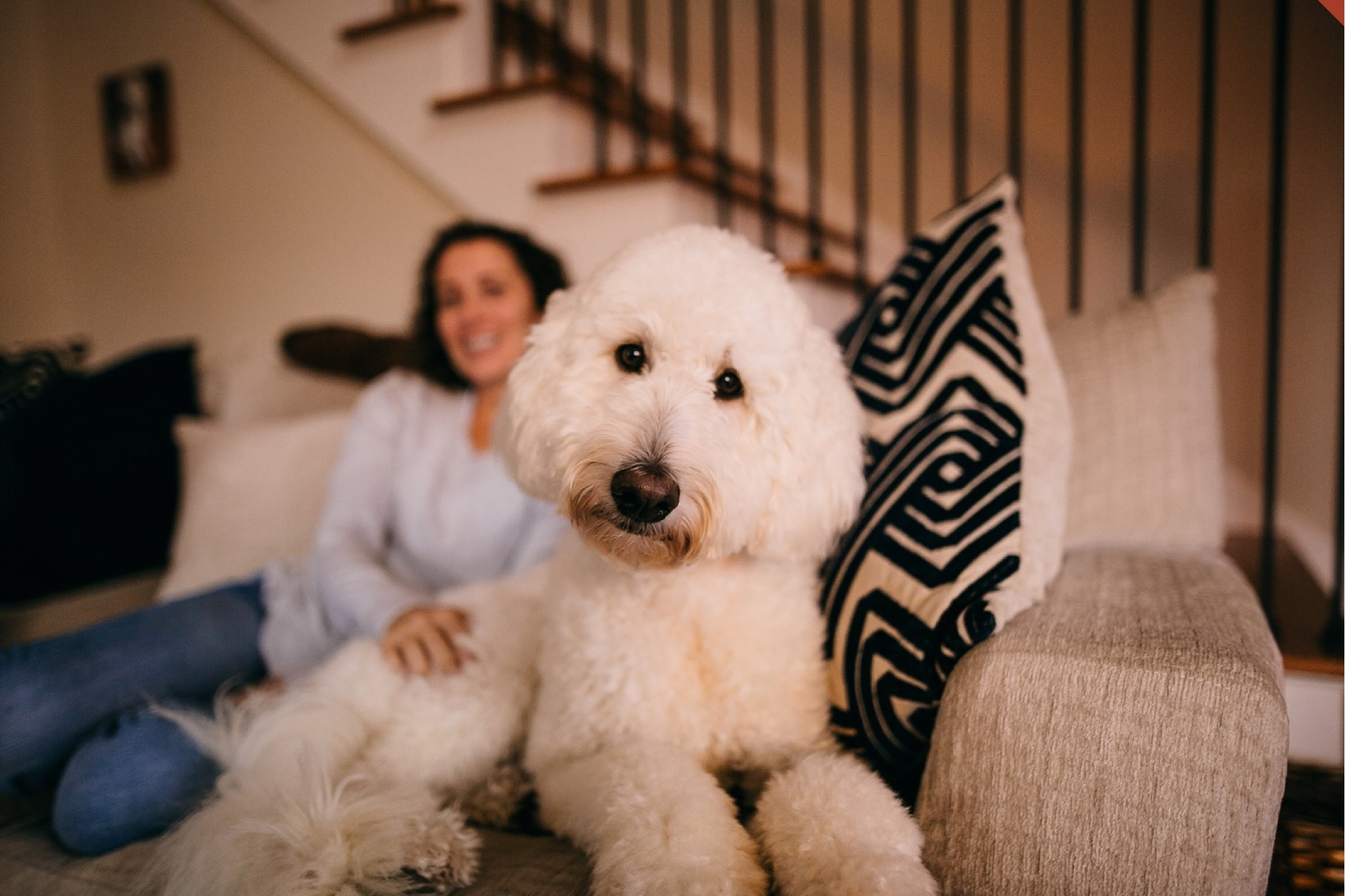 A woman pets a white goldendoodle on a grey couch.
