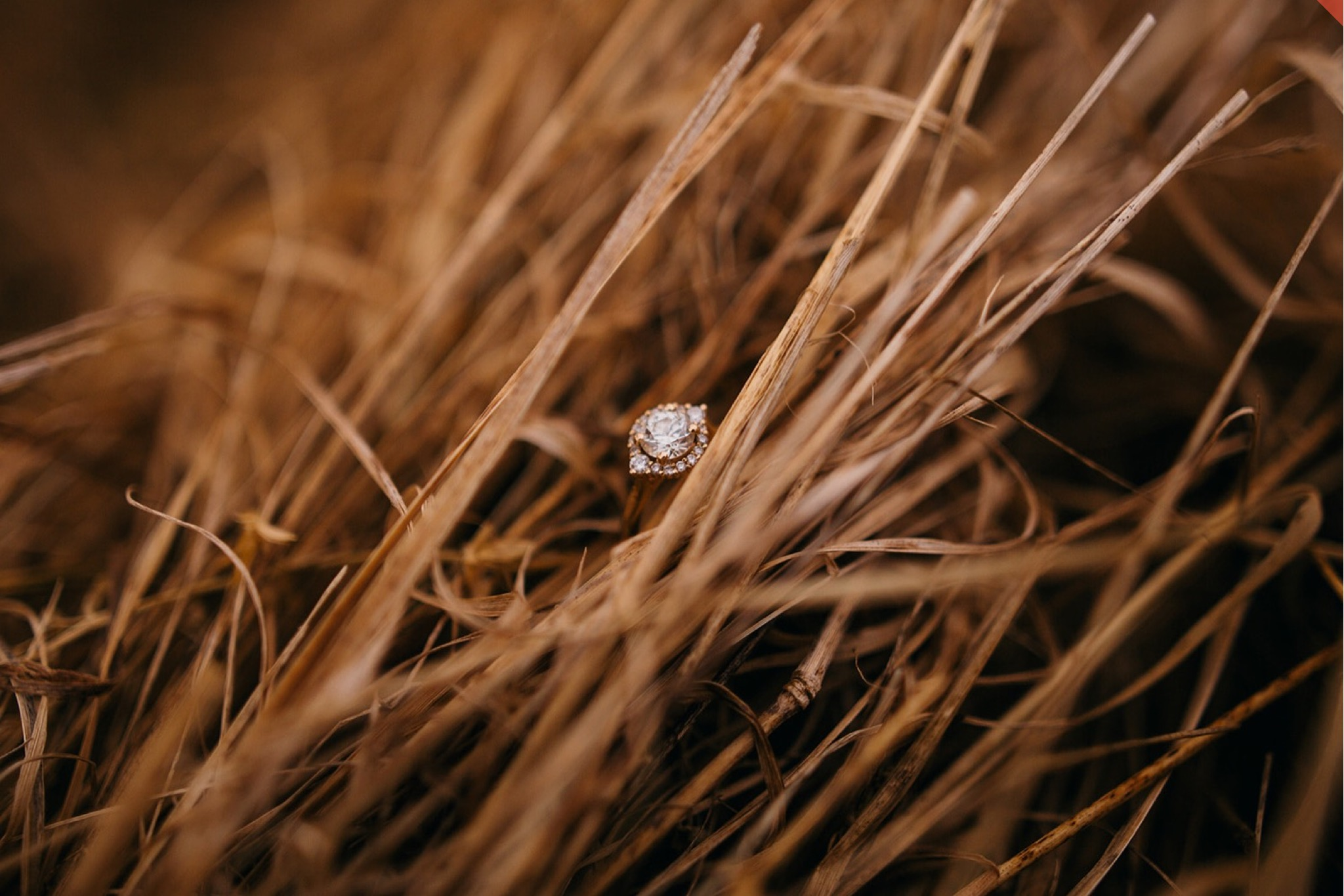 A gold and diamond engagement ring perched in dry golden grass.