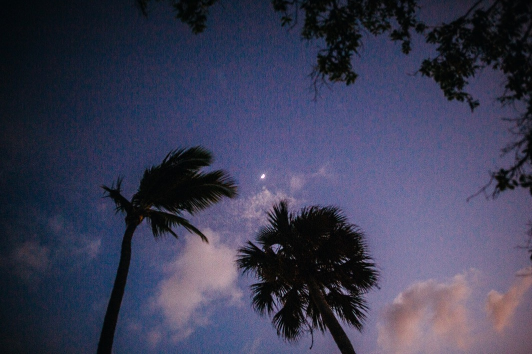 moon rises over palm trees