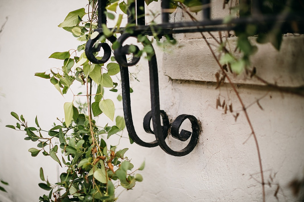 scrolled wrought iron window cage details overgrown with ivy against whitewashed stucco wall