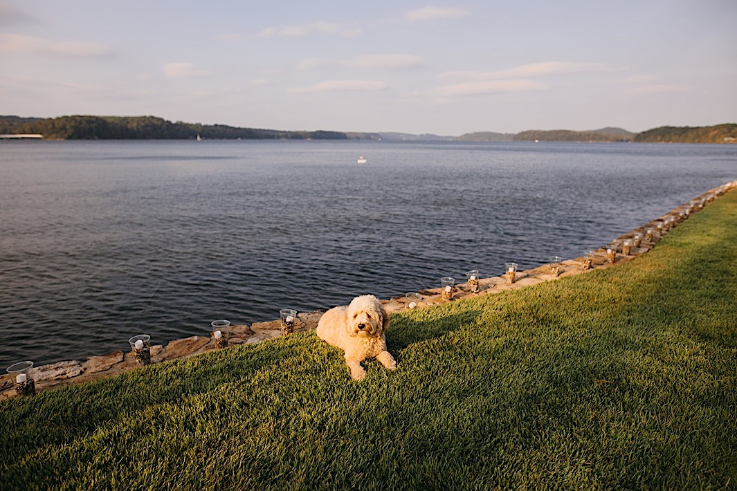 A fluffy dog lays on a lawn next to a lake.