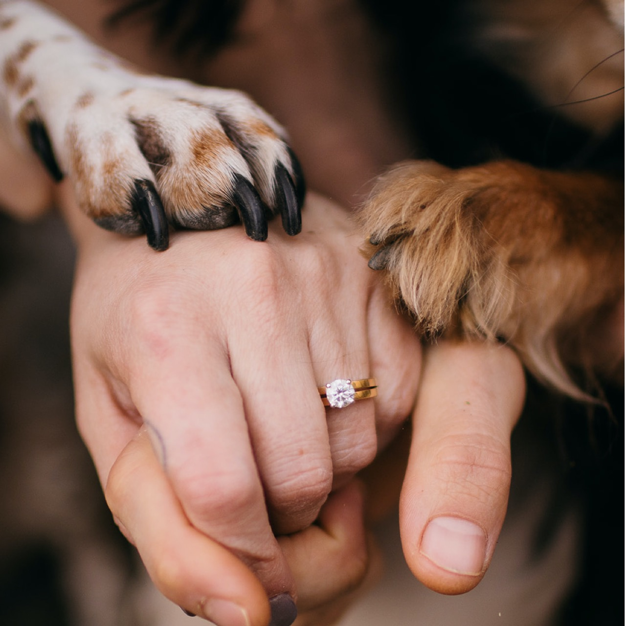 A close up photo of an engaged couple's hands - showing off her solitaire engagement ring - with two dog paws balanced on top of their hands.
