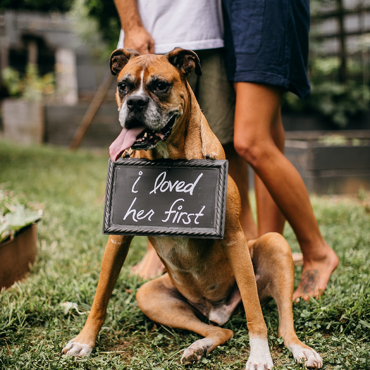 """An old boxer dog sits in front of their owners. They wear a chalkboard sign that reads, """"I loved her first."""""""